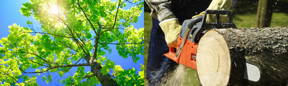 Tree Services Helotes