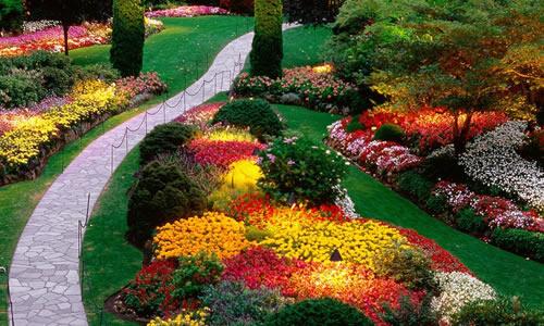 landscape design san antonio tx arbor tree care